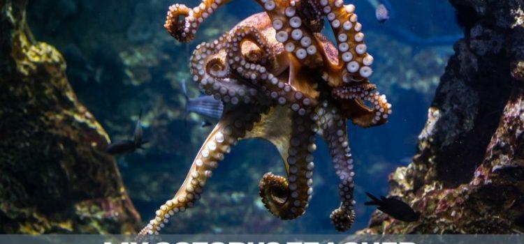 My Octopus Teacher: How Documentaries Tell Stories